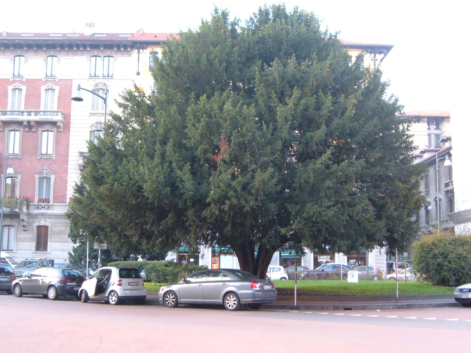 alberi da giardino a basso fusto