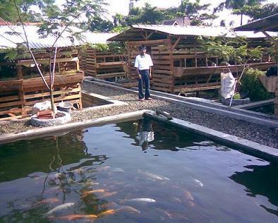 cara membuat kolam koi   zona_ik@n