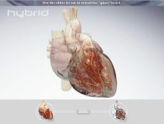 http://1.bp.blogspot.com/_KQHRSAxoe64/SPU7iTpgAjI/AAAAAAAAA9U/9LPjbWq2Lug/s320/Hybrid+Medical+Animation+%7C+Animation+%7C+Interactive+Heart_1224030364196.jpeg