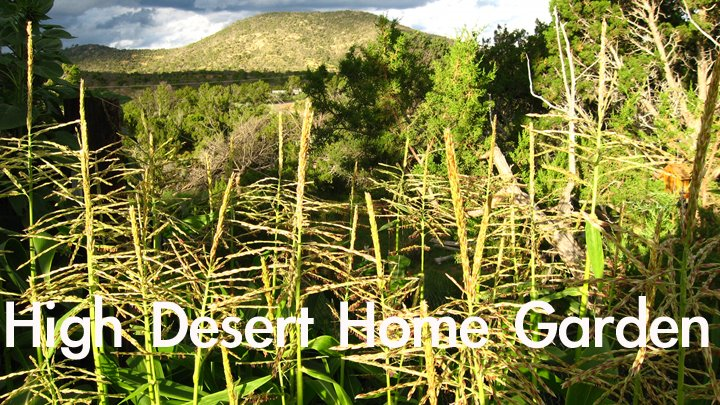 High Desert Home Garden