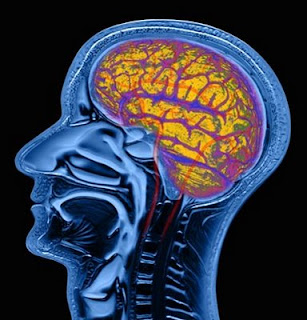 a research on the abnormalities in the brains of stutterers Research we invest in the most innovative ideas in neuroscience and psychiatric research to better understand the causes and develop new ways to treat brain and behavior disorders.