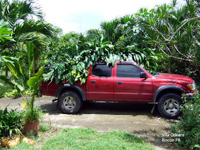 Tropical Truck