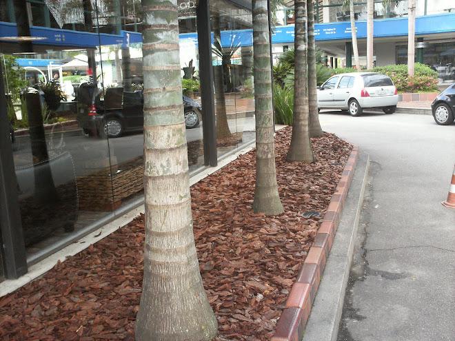 Cascas de Pinus como forração. Lindo né?