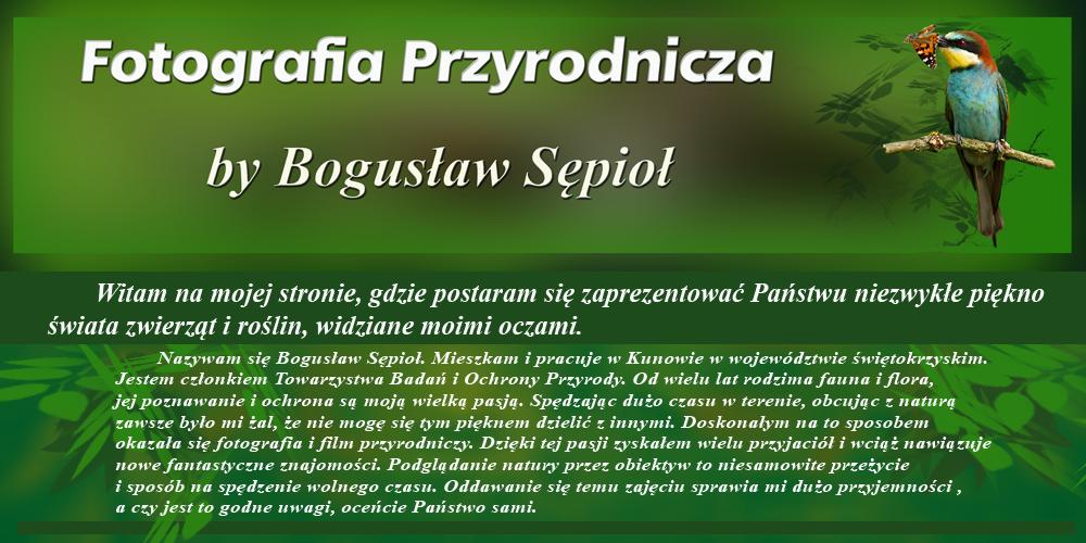 Fotografia Przyrodnicza by Bogusław Sępioł