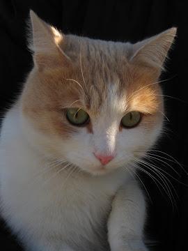 o pisica cu ochi verzi