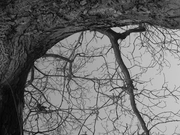 brate de copac