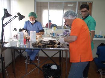 1ª Jornada de Esterilizaciones y/o Castraciones a bajo costo 2011