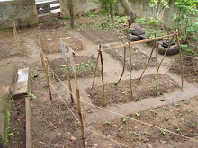 The new and improved Garden