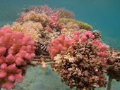 A coral reef garden.