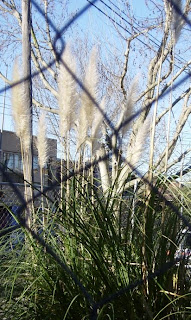 Some kind of large grassy plant - probably not a bulrush, but similar.