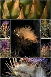 más de 100 collages de plantas