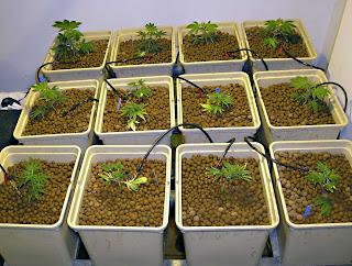 Coevolucion biotecnologia casera for Cultivo interior casero