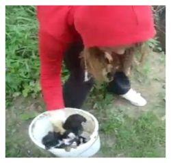 Stop Animal Abuse Video Of Bosnian Girl Throwing Newborn Puppies