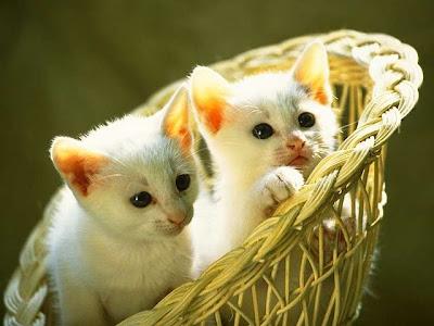 Basket of Cats ~ cute cat