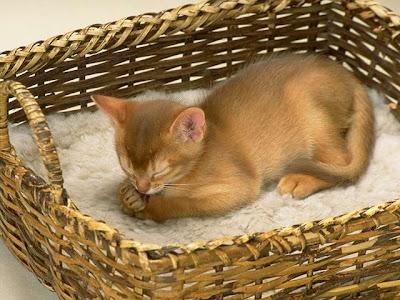 All Cute Cats: Cat in Basket