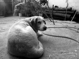 Diario de un perro(Una historia que te hara pensar) Inu