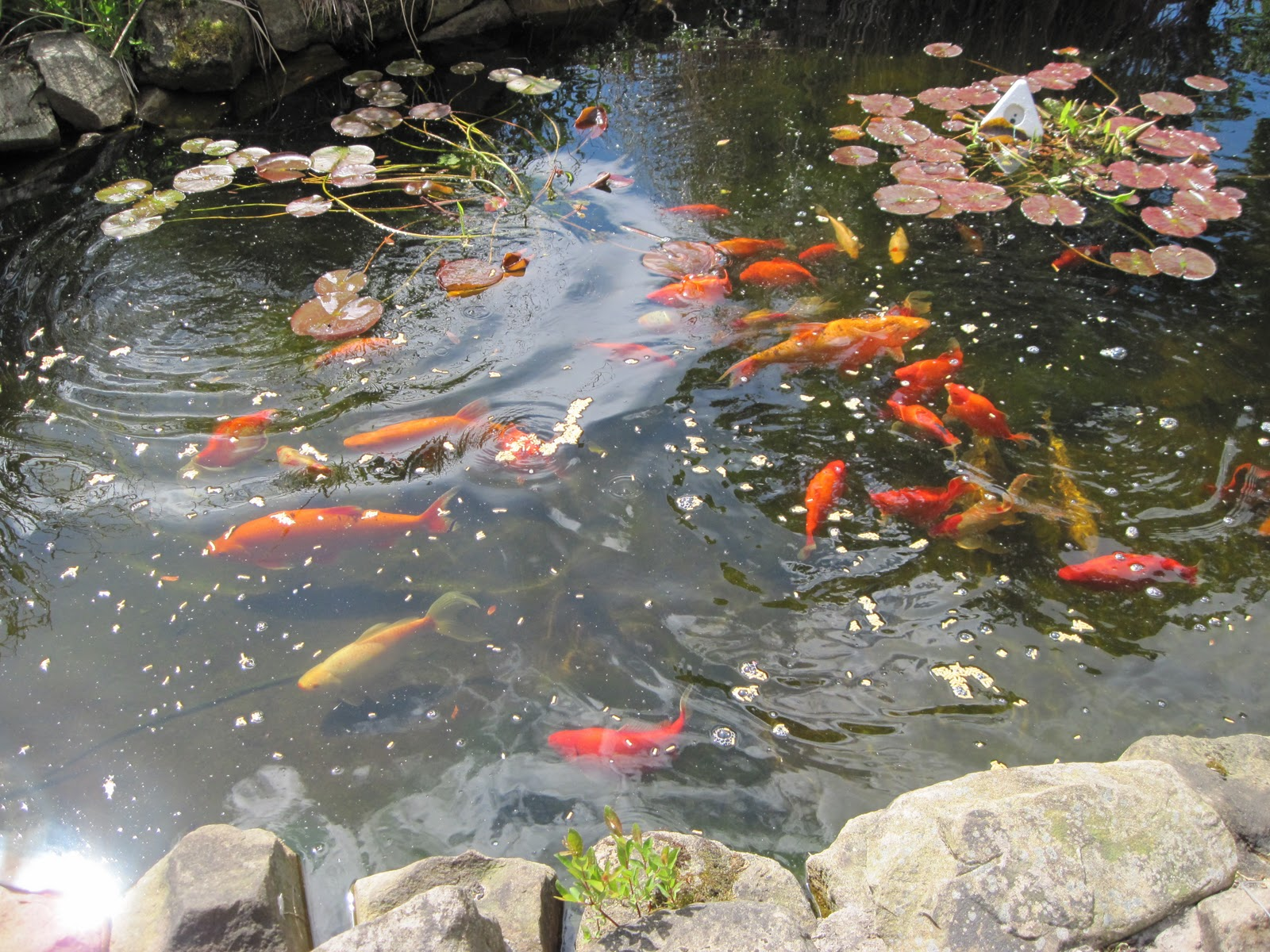 plastic fish ponds bing images