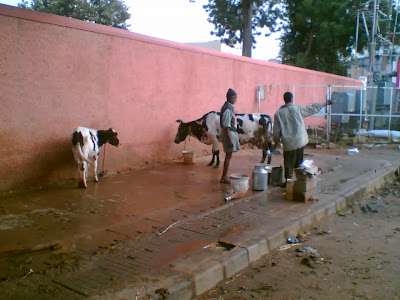 Pure Gomutra ( Cow's Urine ) is available near Commercial Street - Bangalore.