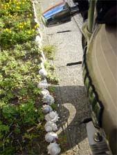 貝殻の花壇
