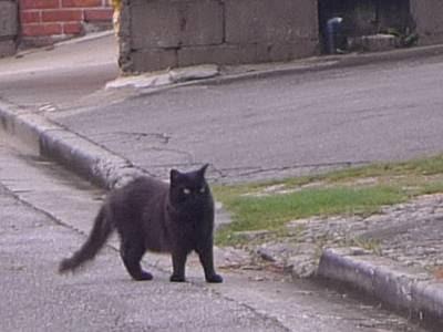 沖縄の猫(くろべえ)