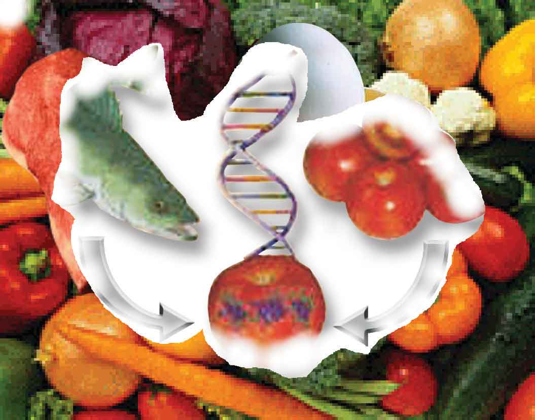 Ingenieria genetica los avances en ingenier a gen tica permitir n incorporar vacunas a los - Ventajas alimentos transgenicos ...