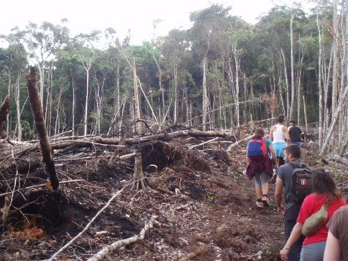 my blog cause and effect illegal logging