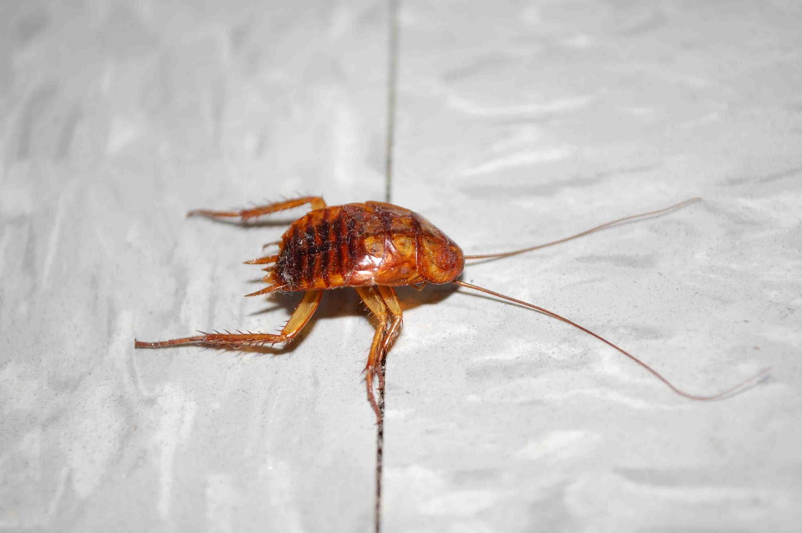 asian singles in roach 4 things that suck about living in asia just last night i was eating at a restaurant and a huge cock roach landed even when you do have an asian (thailand.