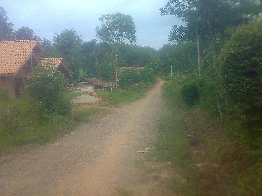 Ini foto jalan di desaku,sekitar satu kilo meter kalau mau ke jalan ...