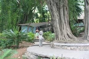 Fotos la habana fotos del jard n zool gico de la habana for Jardin zoologico de la habana
