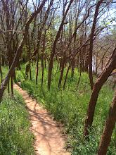 Wee-Chi-Tah Trail