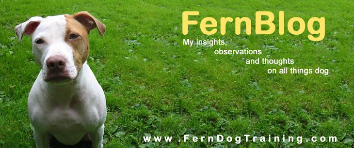 FernBlog