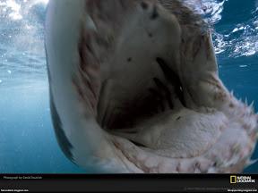 Underwater Creature | nature desktop wallpapers Images Photos