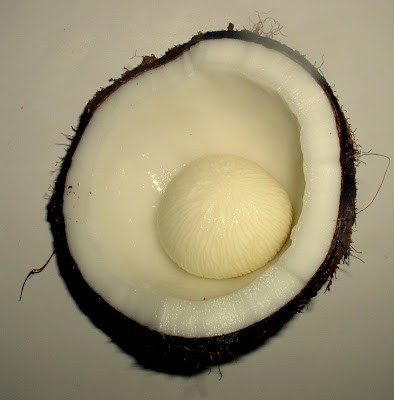 coconut with bubble as it sprouts Siargao Island