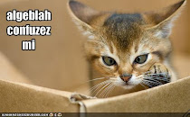 Kucing Terjuling Mata..ha~ha~