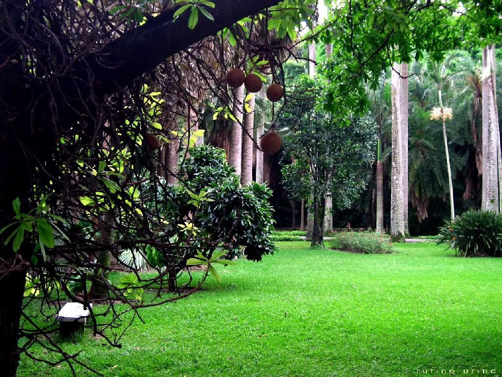 Paisaje bitacora v encuentro de jardines botanicos for A jardin