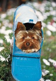 Dandy Dogs Pet Grooming Godfrey Il