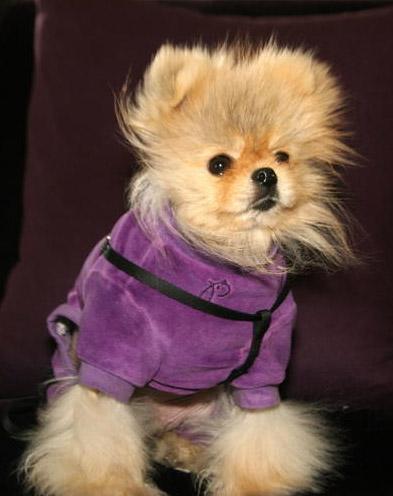 Lisa Vanderpump Dog Schnooky Breed
