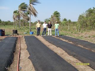 Stevia en bolivia rafopando telefono 00591 for Viveros en paraguay