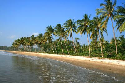 ... manfaat yang diperoleh selain dari pohon kelapa mulai dari batang daun