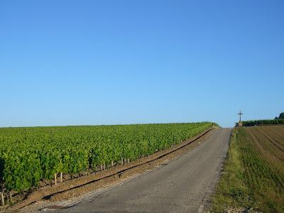 Grand cru Château Latour vineyards in Pauillac Gironde France