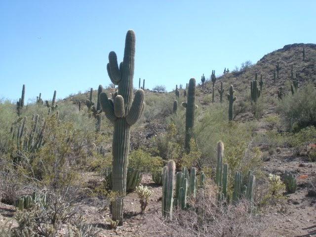 El mundo de largo jardin botanico del desierto phoenix for Jardin del desierto