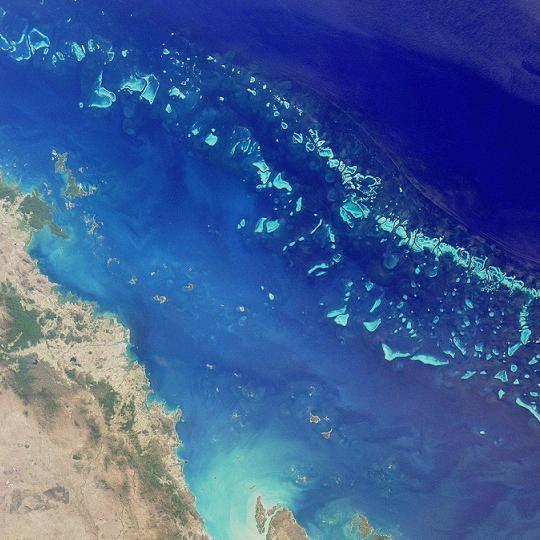 Forscher entdecken zweites Algenriff hinter Great Barrier