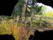 Thru a hole in the outhouse wall...