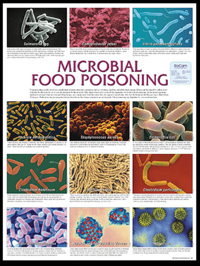 food poisoning in malaysia How food poisoning affects regions around the world southeast asia has the highest number of foodborne illness cases, a new world health organization report finds.