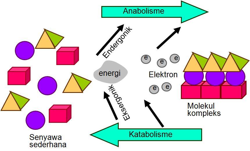 Metabolisme Biohikmah
