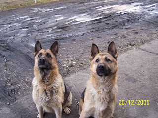Dianka i Bleniu