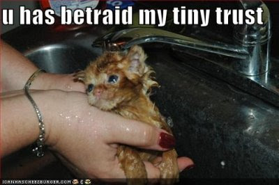 Funny Cute Kitteh Pics lolcats-funny-pictures-orange-kitten-sink-bath-betrayal-trust