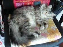Sarita, la companya d'en Kimi. Agost,08.