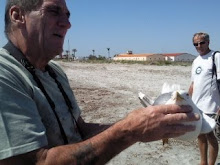 Ray with dying gull