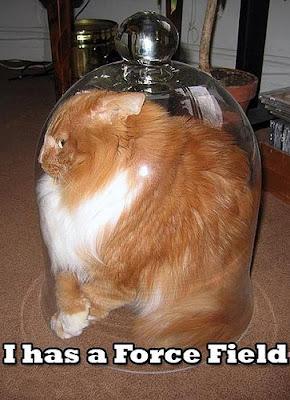 external image lol-cats.jpg